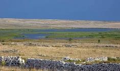 Ornitološki rezervat